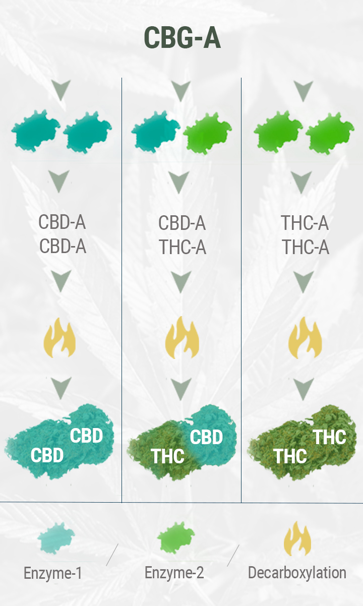 HOW IS CBD FLOWER MADE