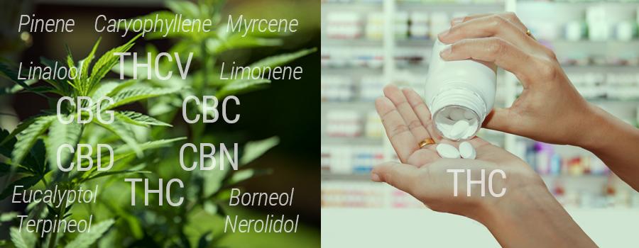 Comparación del THC con el THC sintético