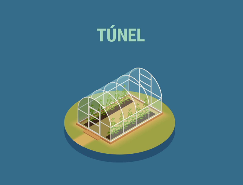Invernaderos de túnel (Quonset)