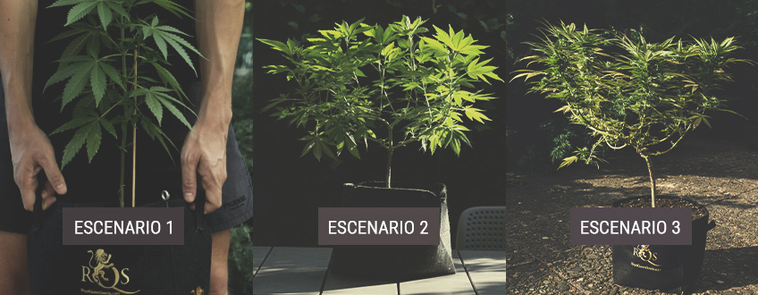 How to Move Your Indoor Cannabis Plants Outdoors