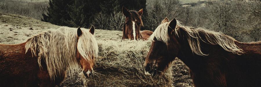 Compost organico de caballo