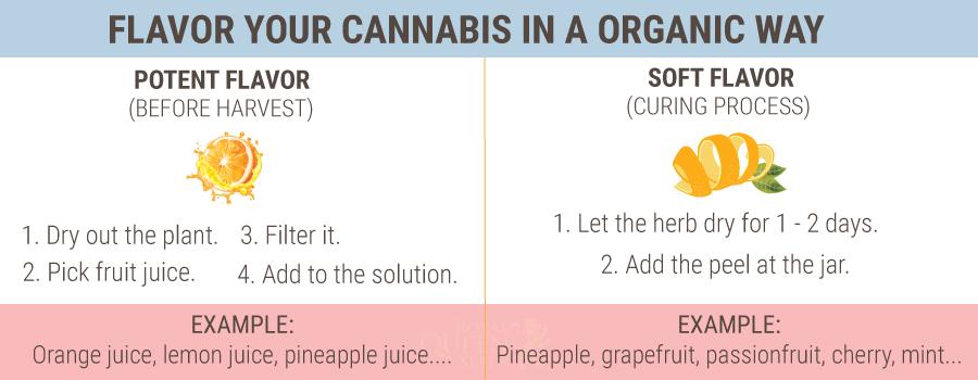 Cómo añadir sabor a la marihuana antes, durante y después de la cosecha