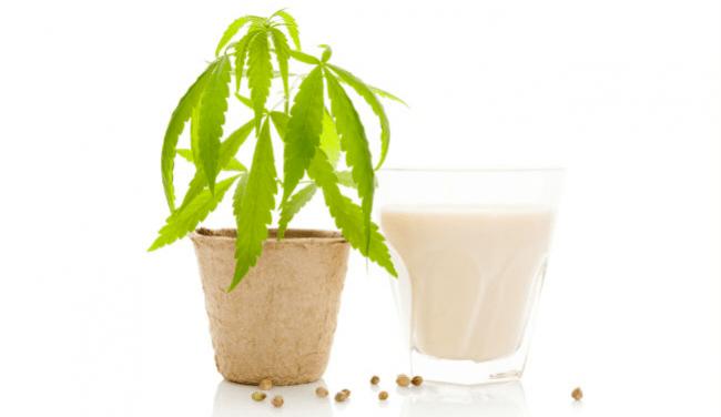 de coco leche de cannabis marihuana aceite de menta helado de aguacate