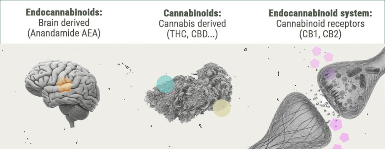 Química del subidón de cannabis