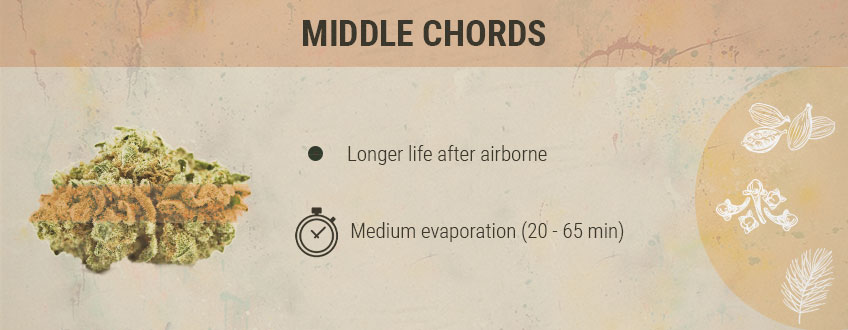 Middle Chords Cannabis