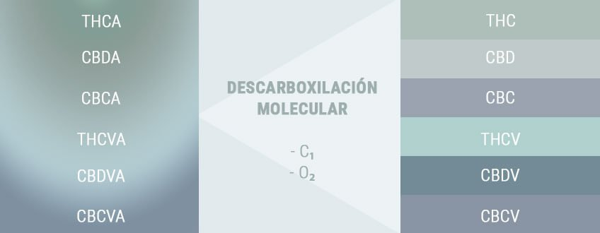 DECARBOXYLATION CHANGES ACIDS TO ACTIVES