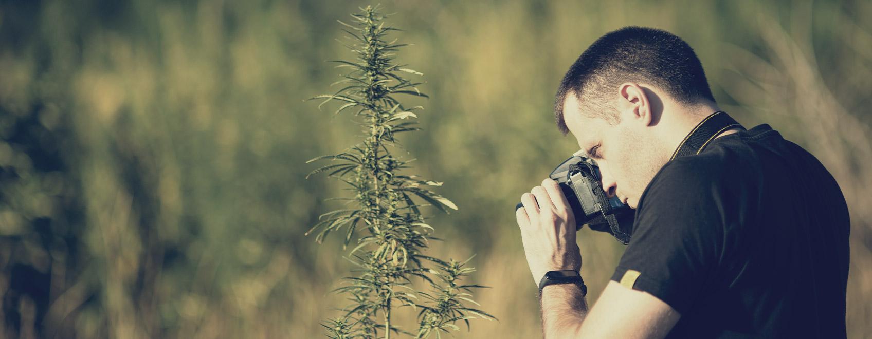 ¿Podrías compartir con nosotros unos consejos para hacer fotografías creativas del cannabis?