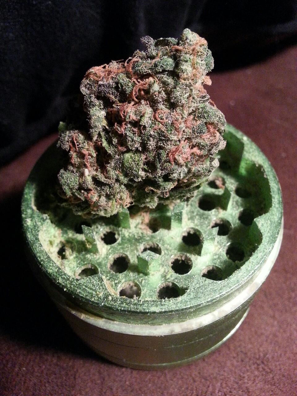 afrutadas variedades cannabis royal queen seeds