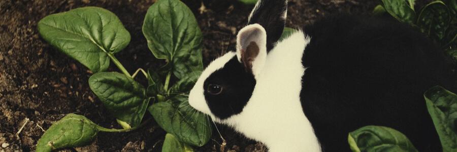 Compost organico de conejo