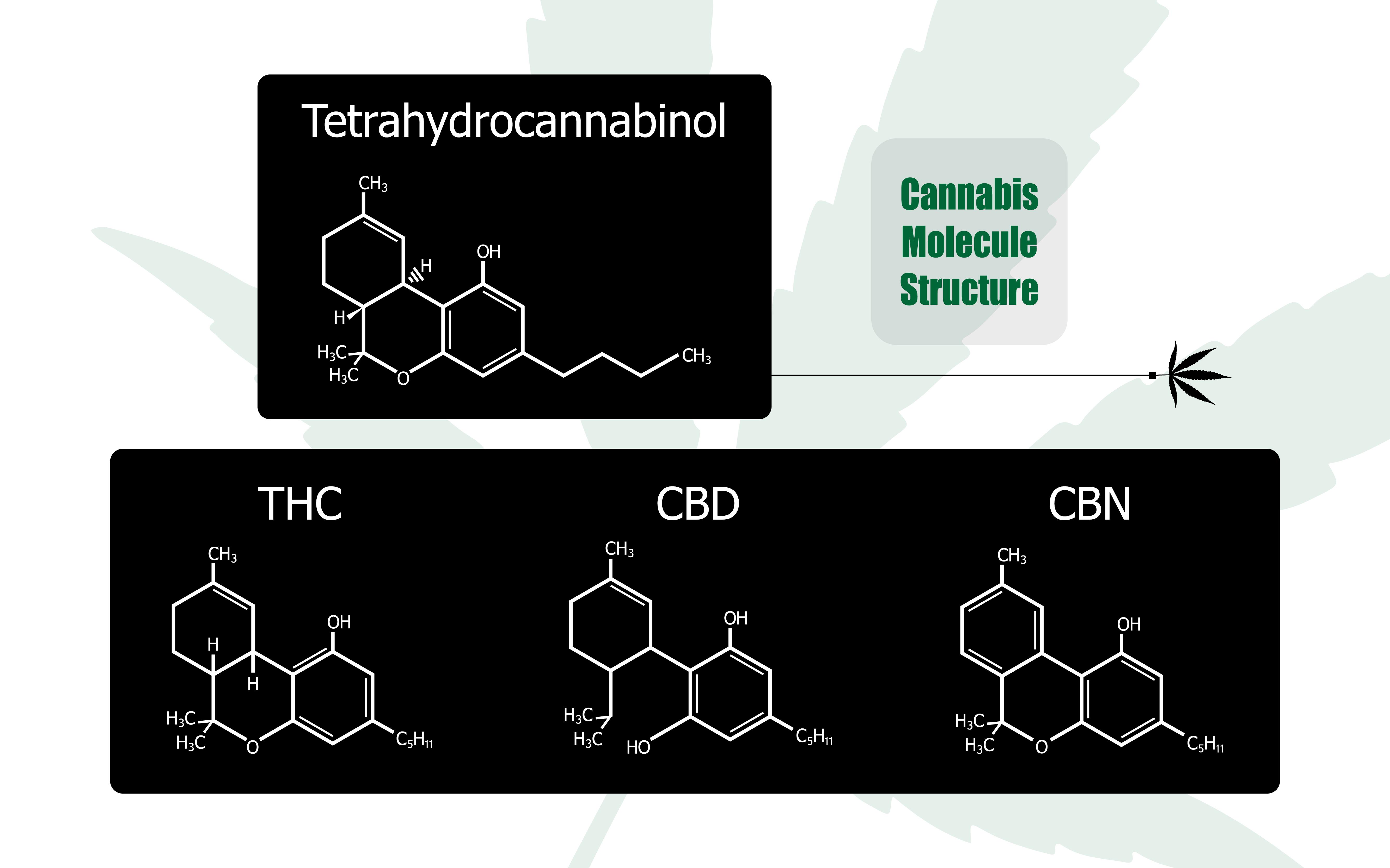 CBD THC efecto entourage counterbones symbiosis sistema inmune psyche cannabis marihuana medicinal cannabinoid endocannabinoid modulate