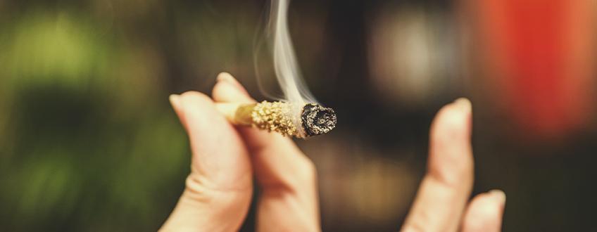 ¿Cómo aprovechar los tallos de la marihuana?