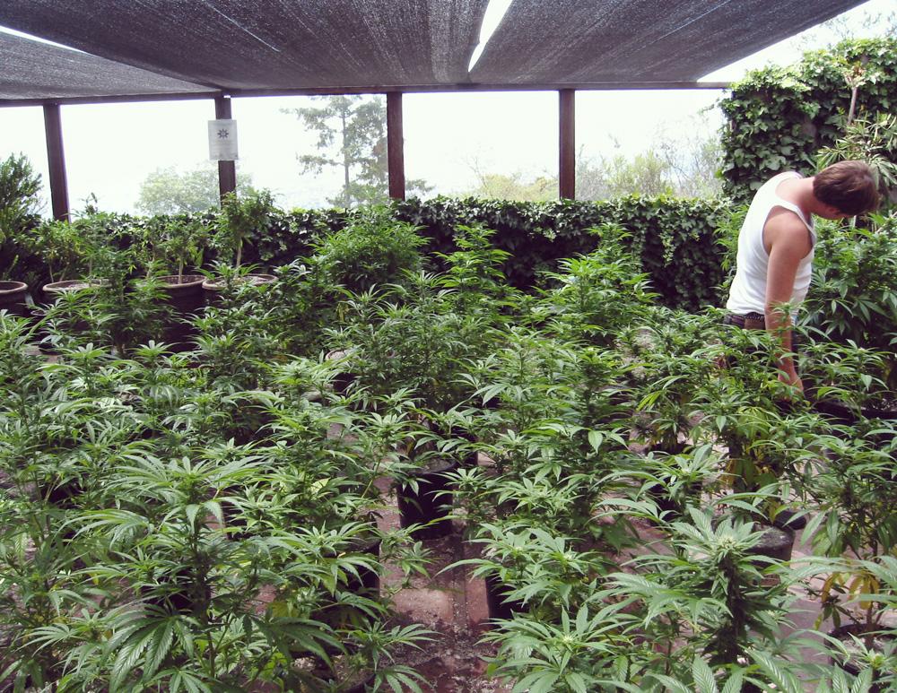 España legalización cataluña ley recreativo médico terapéutico marijuana