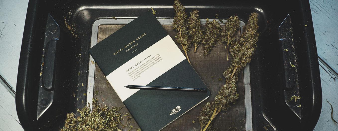 Qué anotar en un diario de consumo de cannabis