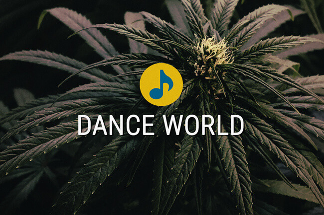 Semillas Médicas de Cannabis Dance World