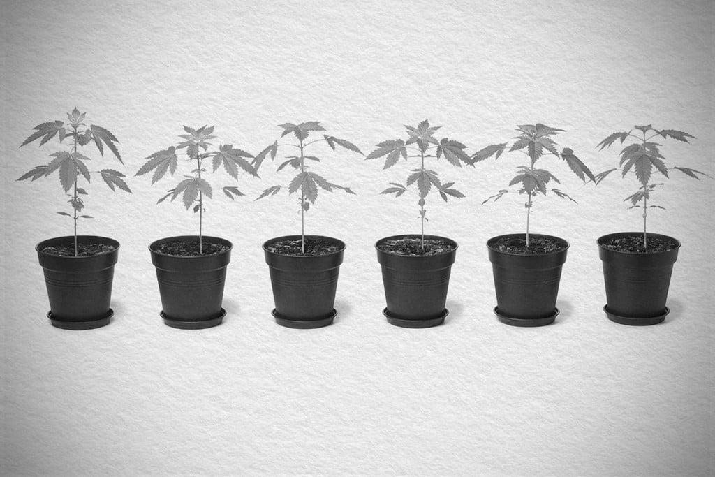 4f1e02de7c12 Tipos de macetas para el cultivo de marihuana - RQS Blog