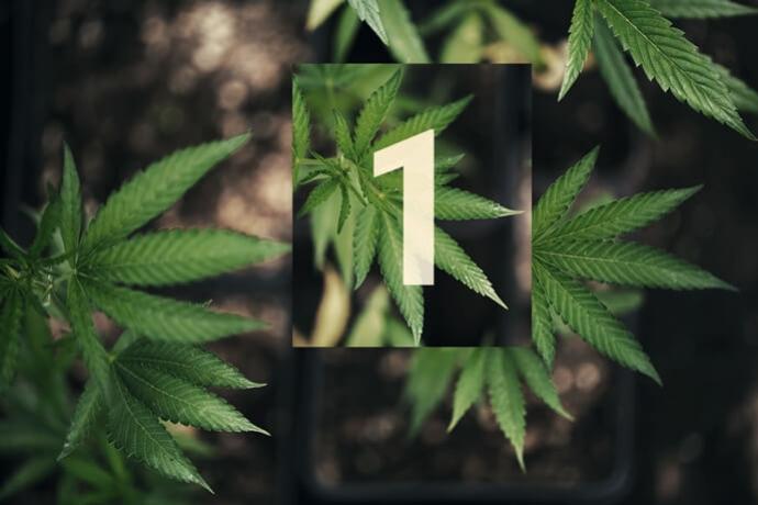 d6d014066f3c Cultivo de cannabis en exterior y fuera del radar. Parte 1  los comienzos