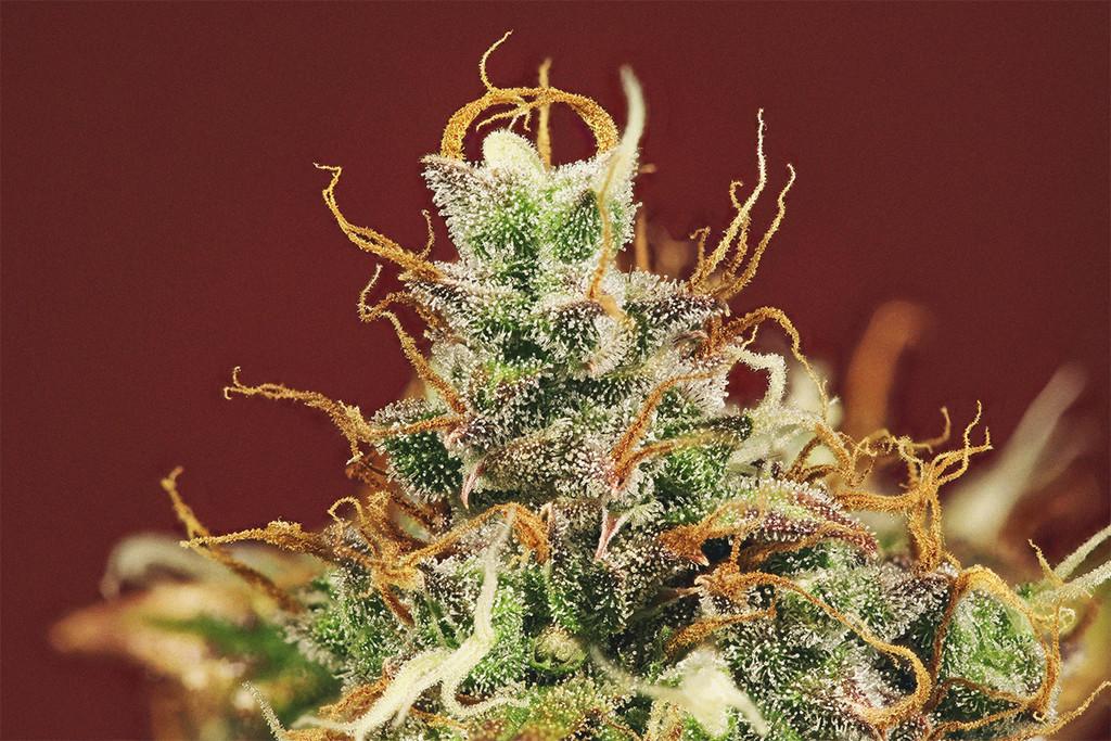 impotencia de marihuana